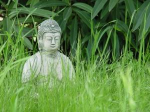 Buddhaingrass